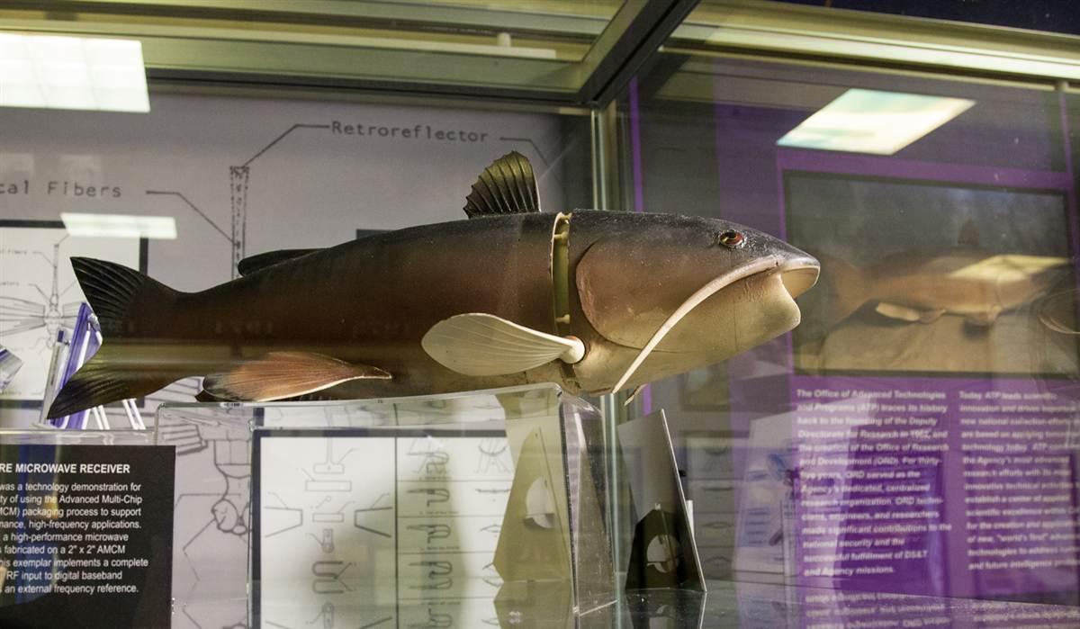 130629-cia-museum-fish.ss_full
